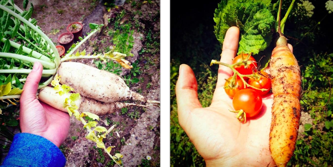 2010年に移住した鎌倉の自宅の庭で栽培した野菜