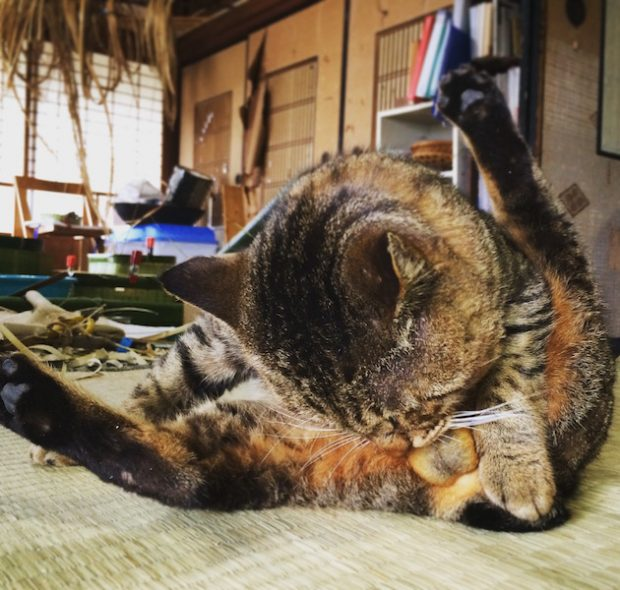 この日は暖かく、飼い猫の男爵ものんびり。