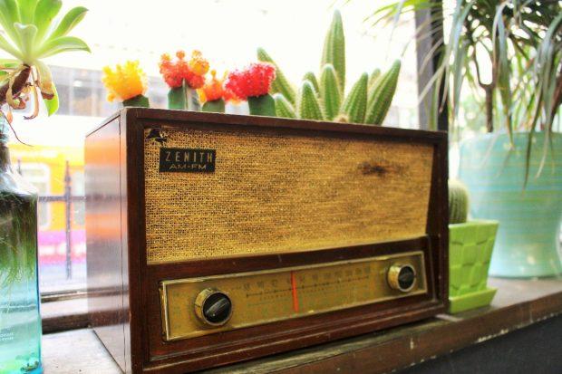 古いラジオに植えられたサボテン