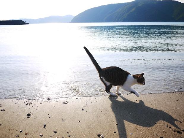 飼い猫と家の前のビーチ。海辺の家で猫を飼うのが夢でした。