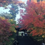 第7回:鎌倉で、地域間交流はじめました|I LOVE 島男子♡