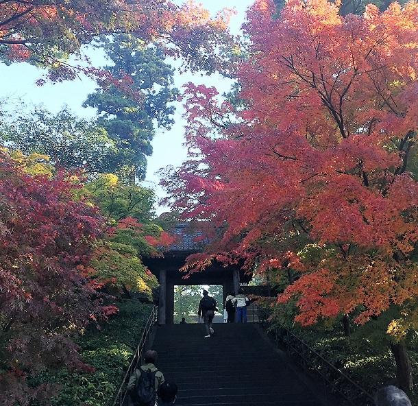 休日は早起きして家族で散策をすることも多いです。北鎌倉までは子供を抱っこして山道を歩いて行ったりも。
