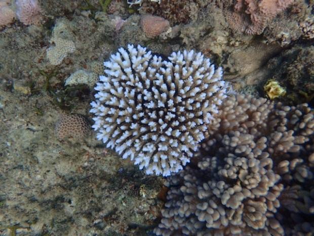 海の中で見つけたハートの形のサンゴ。島の女性たちの中にもこういうかわいらしいものがきちんとあるな、といつも思います。