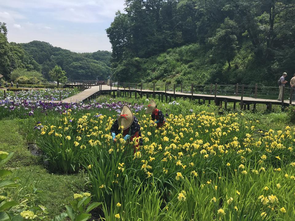 #13 晴れた日は公園へ行こう!二宮団地の近所のオススメ公園をご紹介|YADOKARI✕公社二宮団地