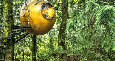 森の小人になった気分で楽しもう。球体のツリーハウス
