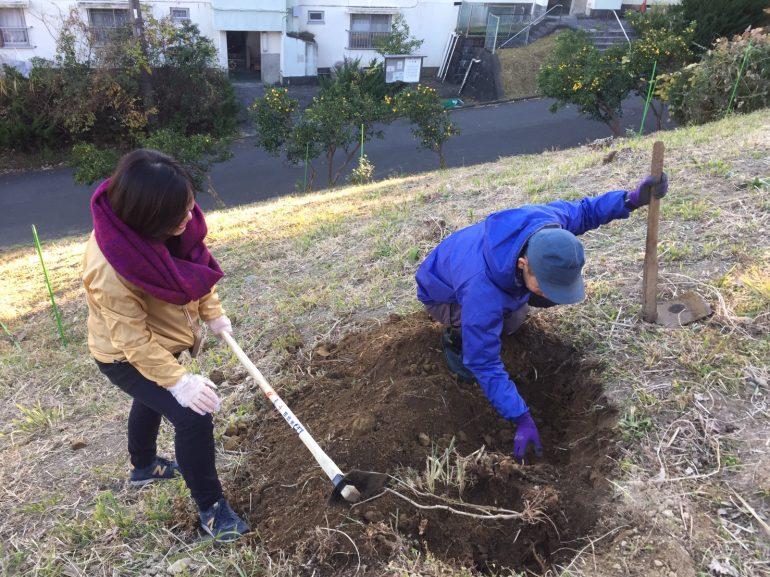 #41 ついに、念願の!葛の根を掘ってきました |YADOKARI✕公社二宮団地