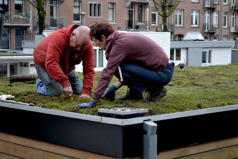 室温を外気より5度下げられる?タイニーハウスの屋上緑化