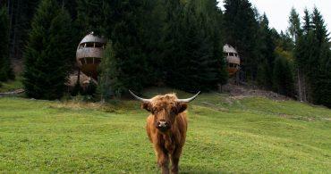 イタリアの森の中に浮かび上がるツリーハウス「Pigna」