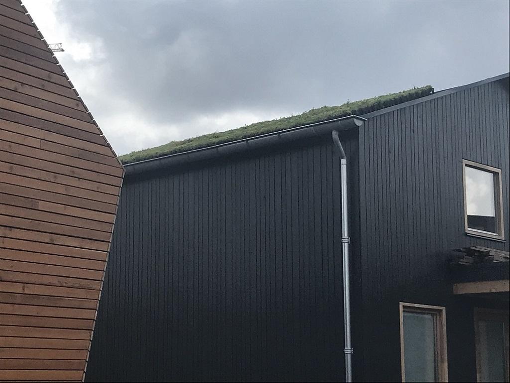 屋根のグリーンがのぞく
